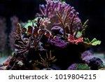 the most popular saltwater fish | Shutterstock . vector #1019804215