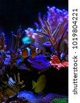 the most popular saltwater fish | Shutterstock . vector #1019804221