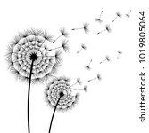 two beautiful stylized black... | Shutterstock . vector #1019805064