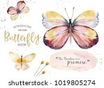 Stock photo set of watercolor butterfly vintage summer isolated spring art watercolour illustration design 1019805274