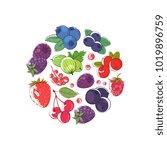 fresh berries round concept... | Shutterstock .eps vector #1019896759