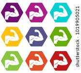 biceps icon set many color... | Shutterstock .eps vector #1019905021