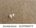 fossil shell on the sand beach  ...   Shutterstock . vector #1019908375