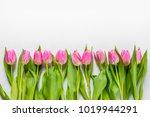 top view of pink tulips... | Shutterstock . vector #1019944291