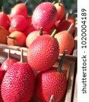 Small photo of Ripe gac fruits