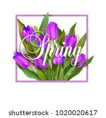 spring text with tulip flower.... | Shutterstock .eps vector #1020020617