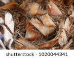 structure of trunk of palm tree ... | Shutterstock . vector #1020044341