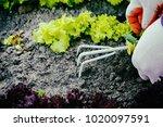 gardening  weeding weeds....   Shutterstock . vector #1020097591
