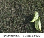 Autum Leaves On Grass