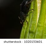 Small photo of black beetle down on the green grass. macro photography of wildlife. animalism