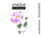 flower slogan isolated on white ... | Shutterstock .eps vector #1020163051