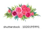 hand painted vibrant watercolor ... | Shutterstock . vector #1020195991