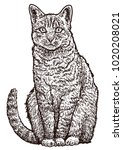sitting cat illustration ...   Shutterstock .eps vector #1020208021