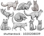 Stock vector cat collection illustration drawing engraving ink line art vector 1020208039