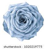 rose  light blue flower  on... | Shutterstock . vector #1020219775