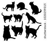 black silhouette of cat sitting ... | Shutterstock . vector #1020259315