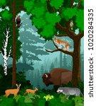 vector woodland green forest... | Shutterstock .eps vector #1020284335