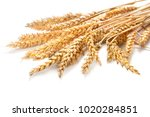 sheaf of ears of wheat isolated ... | Shutterstock . vector #1020284851