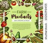 vegetable and mushroom sketch... | Shutterstock .eps vector #1020293455
