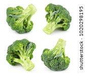 broccoli isolated. broccoli on... | Shutterstock . vector #1020298195