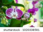 image of a beautiful purple... | Shutterstock . vector #1020338581