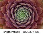 plants photography by procolour ... | Shutterstock . vector #1020374431