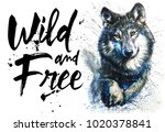 wolf watercolor animals... | Shutterstock . vector #1020378841
