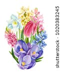 bouquet of colorful spring... | Shutterstock . vector #1020383245