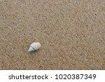 fossil shell on the sand beach  ... | Shutterstock . vector #1020387349