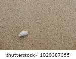 fossil shell on the sand beach  ... | Shutterstock . vector #1020387355