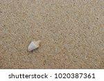 fossil shell on the sand beach  ... | Shutterstock . vector #1020387361