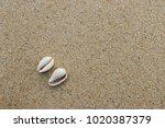fossil shell on the sand beach  ...   Shutterstock . vector #1020387379