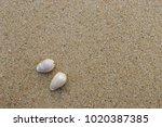 fossil shell on the sand beach  ...   Shutterstock . vector #1020387385