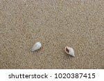 fossil shell on the sand beach  ...   Shutterstock . vector #1020387415