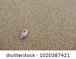 fossil shell on the sand beach  ...   Shutterstock . vector #1020387421