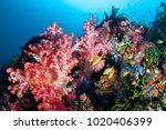 a colorful coral reef thrives... | Shutterstock . vector #1020406399