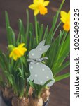 The Wooden Polka Dot Hare And...