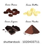 cocoa products. cocoa beans ... | Shutterstock .eps vector #1020433711