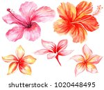 watercolor set of floral... | Shutterstock . vector #1020448495