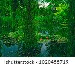 the garden and weeping willow ... | Shutterstock . vector #1020455719