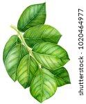 watercolor illustration... | Shutterstock . vector #1020464977