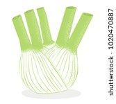 fennel   hand drawn vector...   Shutterstock .eps vector #1020470887