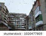 flock of flying birds above old ... | Shutterstock . vector #1020477805