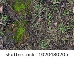 close up ground with moss... | Shutterstock . vector #1020480205