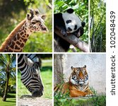 zoo collage with six photos of... | Shutterstock . vector #102048439