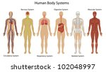 illustration of the human body... | Shutterstock .eps vector #102048997