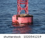 sea lions on a buoy | Shutterstock . vector #1020541219