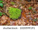 Vibrant Green Moss Growing On...