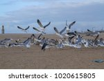 seagulls flying on the beach | Shutterstock . vector #1020615805