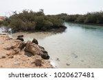 desert lake in ras mohammed...   Shutterstock . vector #1020627481